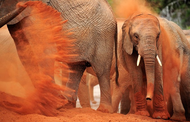 Tsavo Dust Bath 2