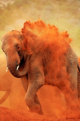 Tsavo Dust Bath 4