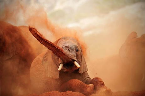 Tsavo Dust Bath1