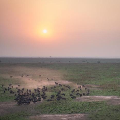 Garamba National Park, DRC.