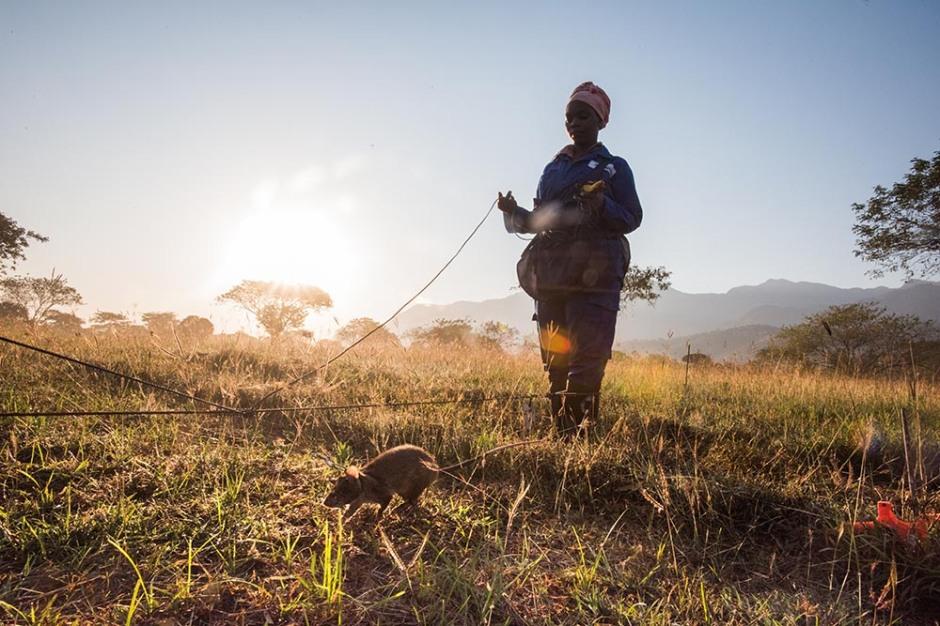 Mia Collis_HeroRATs_Tanzania-122